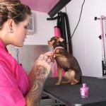 Hund_Nagellack_Quelle_dogwastebagshop.com
