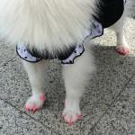 Hund_Nagellack_Quelle_rina-alcantara.com