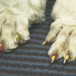 Hund_Nagellack_Quelle_warrenlondon.com