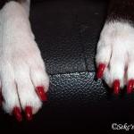 Hund_Nagellack