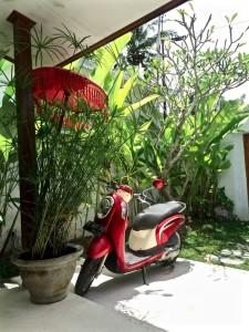 IMG_Mit Handkuss | Bali